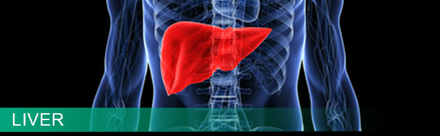 Liver Health Information Resources